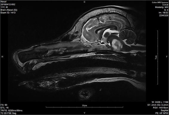 Galen 1.5T dedicated veterinary MRI dicom