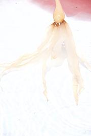 Seaweed Series IMG_4616