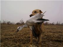 timber and goose