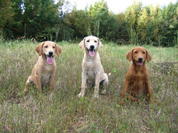 Timber and his sisters as pups
