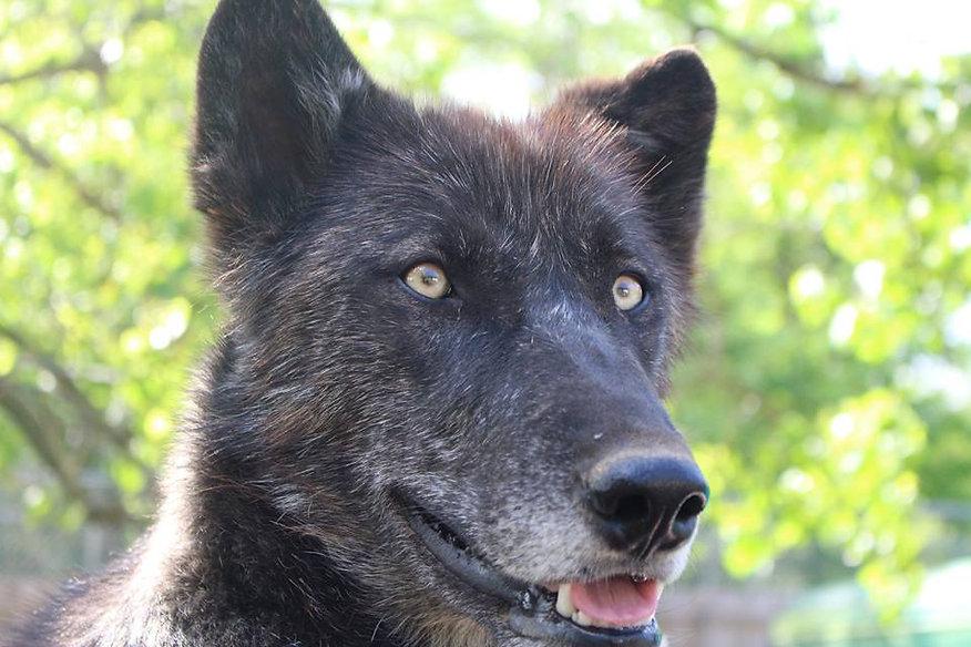 Wolf Knowledge Most FAQ | wolfcreekhabitat