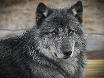 Wolf Creek Habitat and Rescue