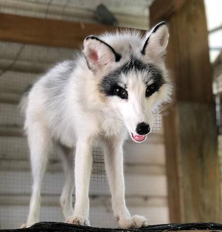 wolfcreekhabitat