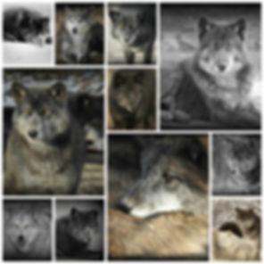 PicMonkey CollageCARD.jpg