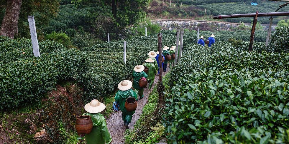 DAY TRIP: Hangzhou Art, Lake, and Tea