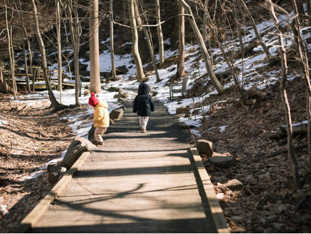 New Jersey Suburb Nature Guide