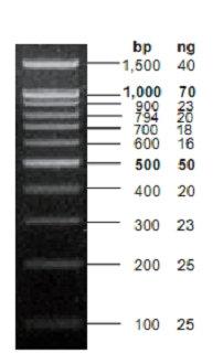 DNA Ladder Marker