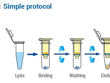 [NEW] WizPrep™ Viral DNA/RNA Mini Kit (V2)