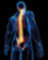 spine 1.jpg