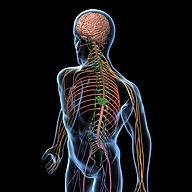 nerves brain cool.jpg