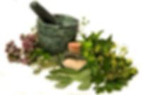 Medicinal-Herbs.jpg