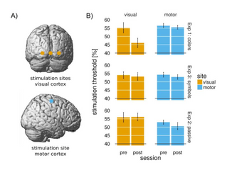 Training-induced synaesthesia - new paper!