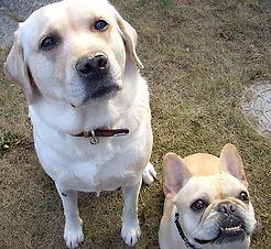 犬2匹.jpg