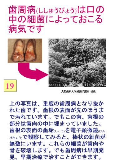 large19.jpg