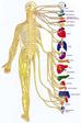 La quiropráctica: más allá que quitar tu dolor