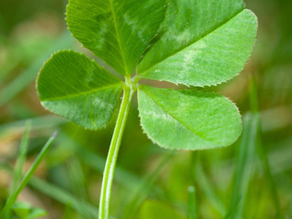 Five Ways to Increase Your Job Search Luck