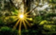 forest-396025_1280.jpg