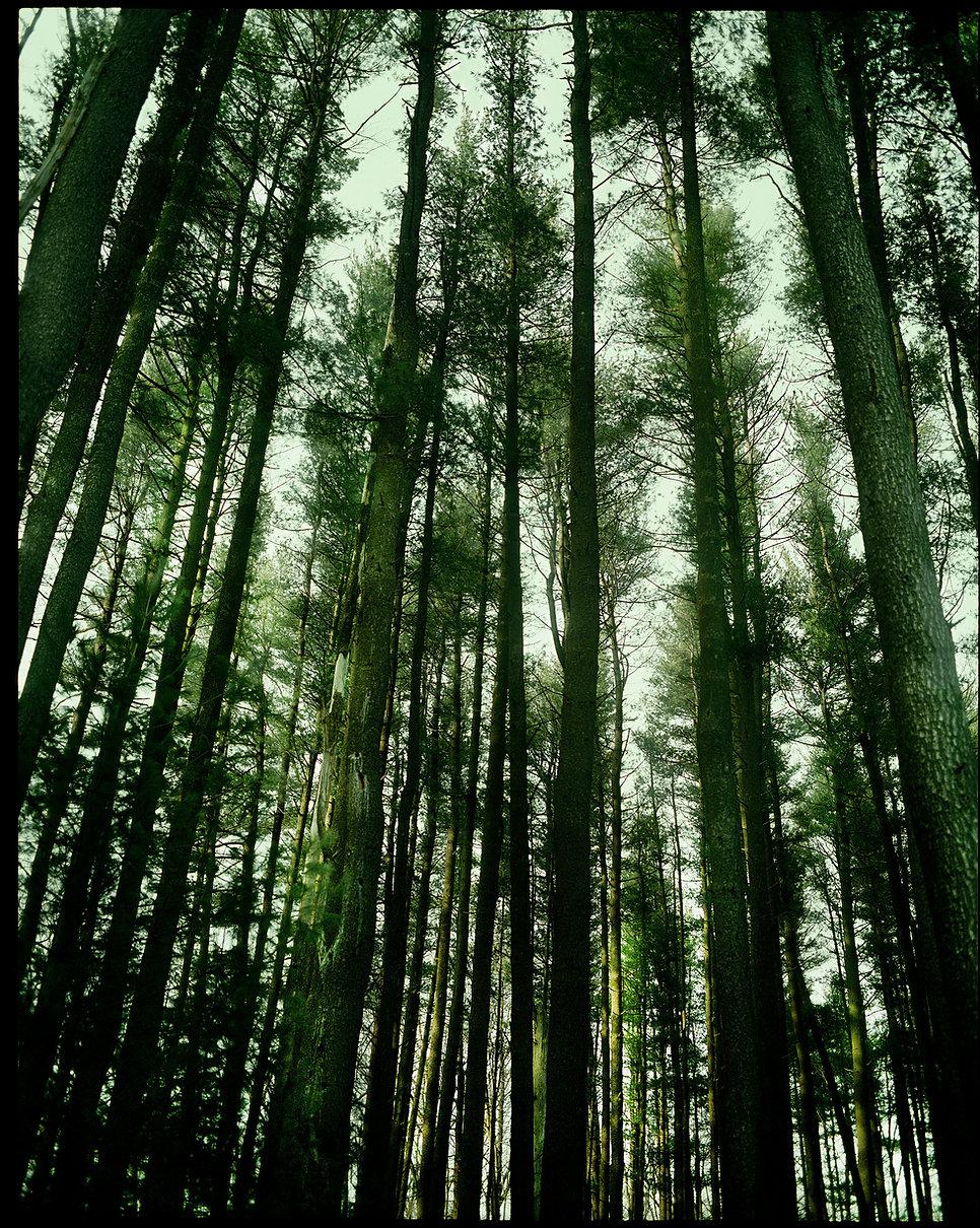 """""""Green pines"""" Bear mountain NY"""