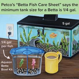 "Petco's ""Betta Fish Care Sheet"""