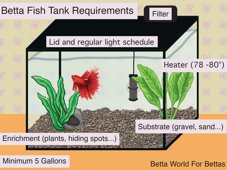 Betta Fish Tank Requirements