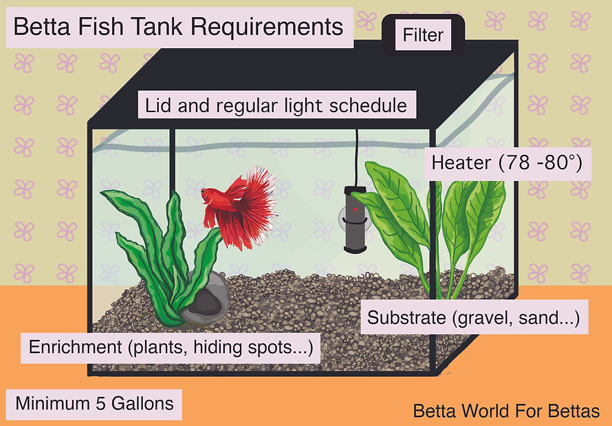 Betta Fish Tank Requirements Betta World For Be