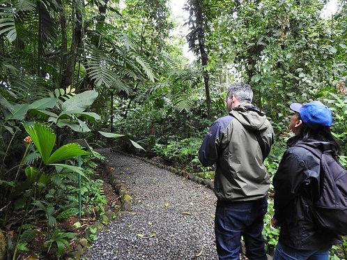 Tour Caminata Guiada Diurna Extranjeros
