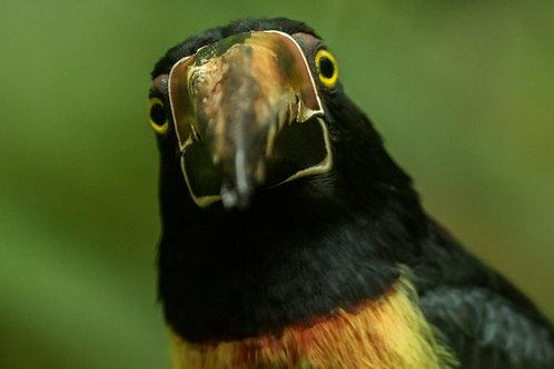 Tour de Observación de Aves Extranjeros