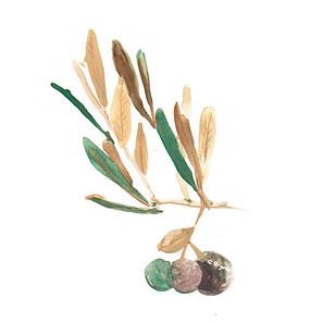 Olive branch for Baptism card