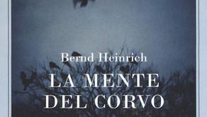 La mente del corvo di Bernd Heinrich - Editore Adelphi