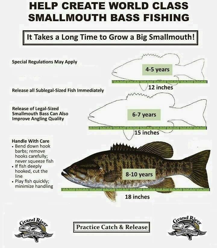 Smallmouth Bass Catch and Release