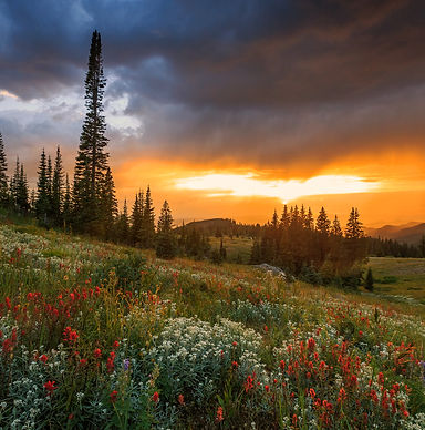 Wildflower sunset in the Rocky Mountains