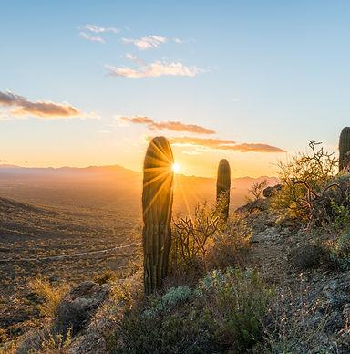 Sunset in Saguaro National Park West.jpg