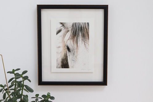 Framed Art - Horse Photograph