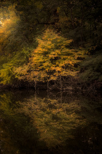 Intimate Fall