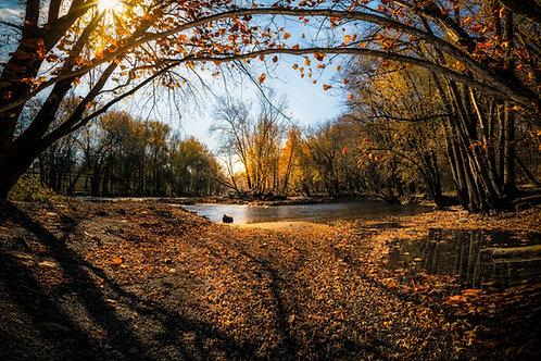 Glow of Fall
