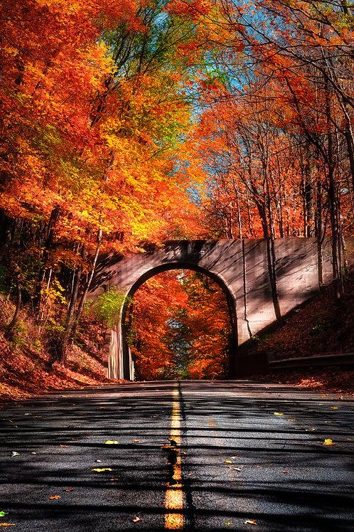 Fall Into Color