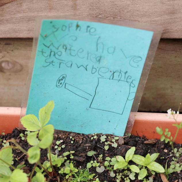 Kindergarden Cooks Summer Scheme IMages