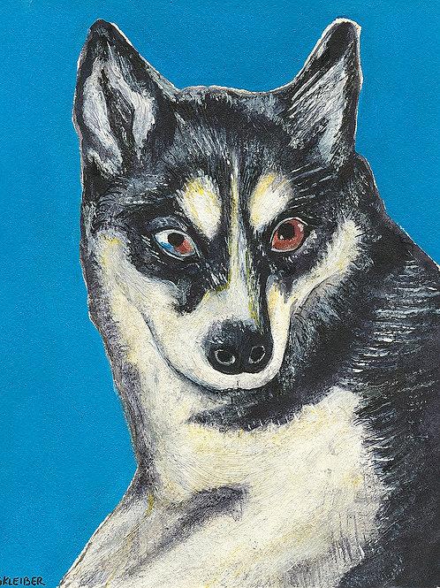 Dog In Blue