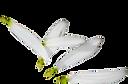 petals_edited_edited.png