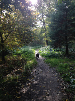 Dog walking in Leyton