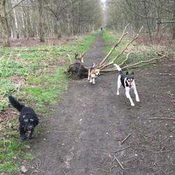 Doggie day care Walksfar dog walking