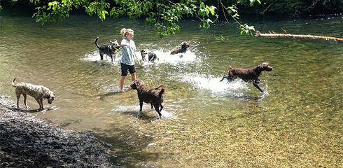 dog walker in hackney, dog walker in Stoke Newington