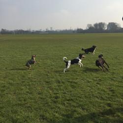dog walking in Stoke Newington