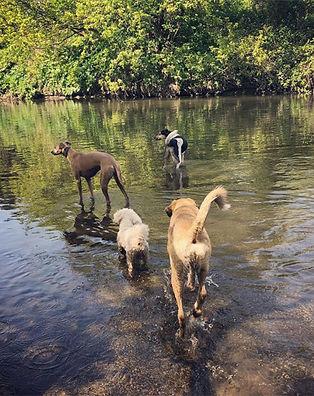 Dog walking in Stoke newington, dog walking in stratford, good dog walkers hackney