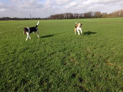 dog walker in Homerton