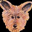 dog walking in hackney dog walkingin stoke newington