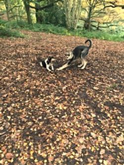 Dog walking in East London