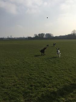 dog walking in Hackney