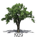 ECC ELM TREE LOGO 2020.jpeg