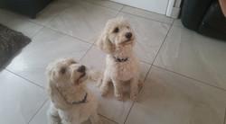 Zeus & Troy